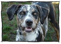 testimonials_dog4